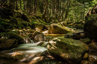Golem's Fantastical Forest