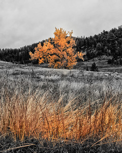 Autumn Gold in the Black Hills