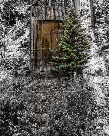 Outhouse and Pine Tree