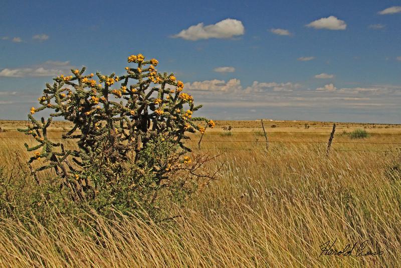 A landscape taken Oct 4, 2010 near Fort Sumner, NM.