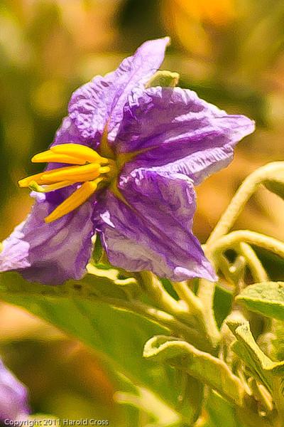 A Wildflower taken July 13, 2011 near Las Vegas, NM.