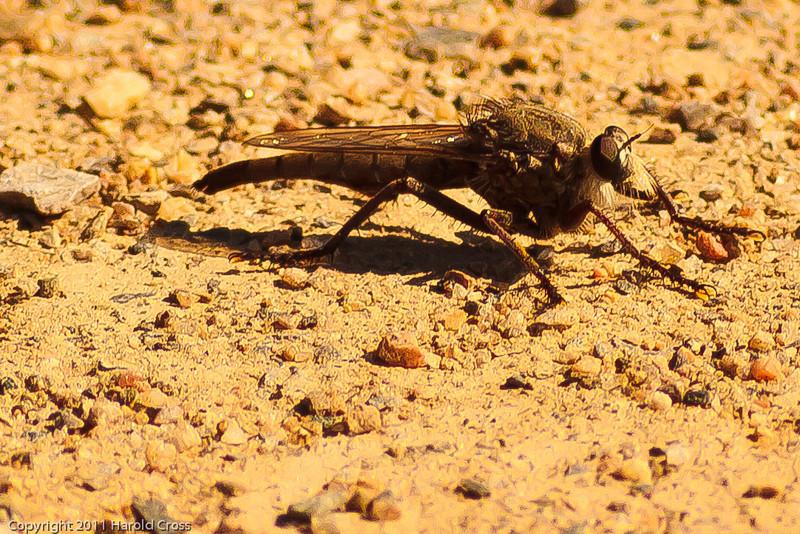 An insect taken July 13, 2011 near Las Vegas, NM.
