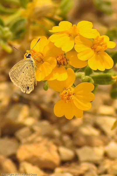 A wildflower taken July 17, 2011 near Kenna, NM.