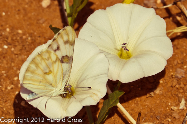 A butterfly and wildflowers taken April 29, 2012 near Portales, NM.