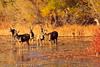 Deer taken Nov. 2, 2011 near Soccorro, NM.