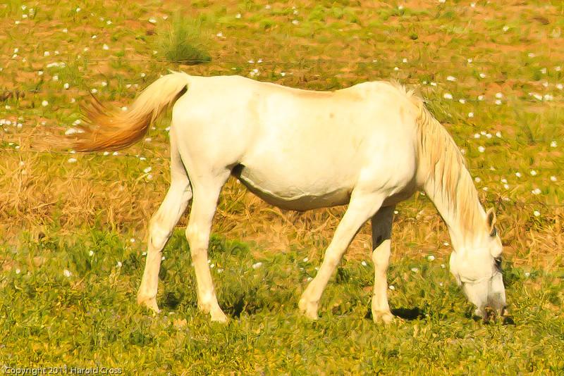A horse taken July 13, 2011 near Las Vegas, NM.