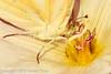 A butterfly taken April 29, 2012 near Portales, NM.