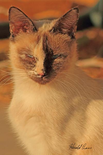 A cat taken May 16, 2011 near Portales, NM.