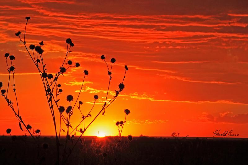 A landscape taken Oct. 1, 2010 near Portales, NM.