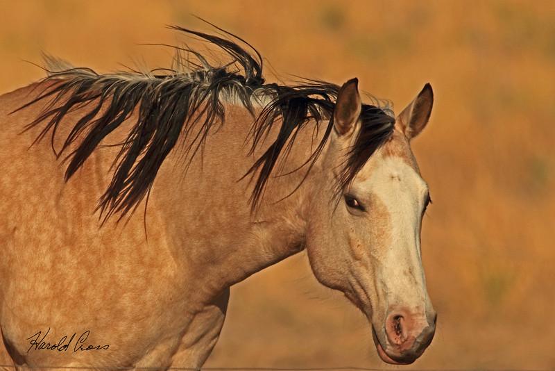 A horse taken May 14, 2011 near Portales, NM.