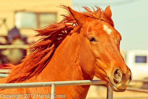 A horse taken April 28, 2012 near Portales, NM.