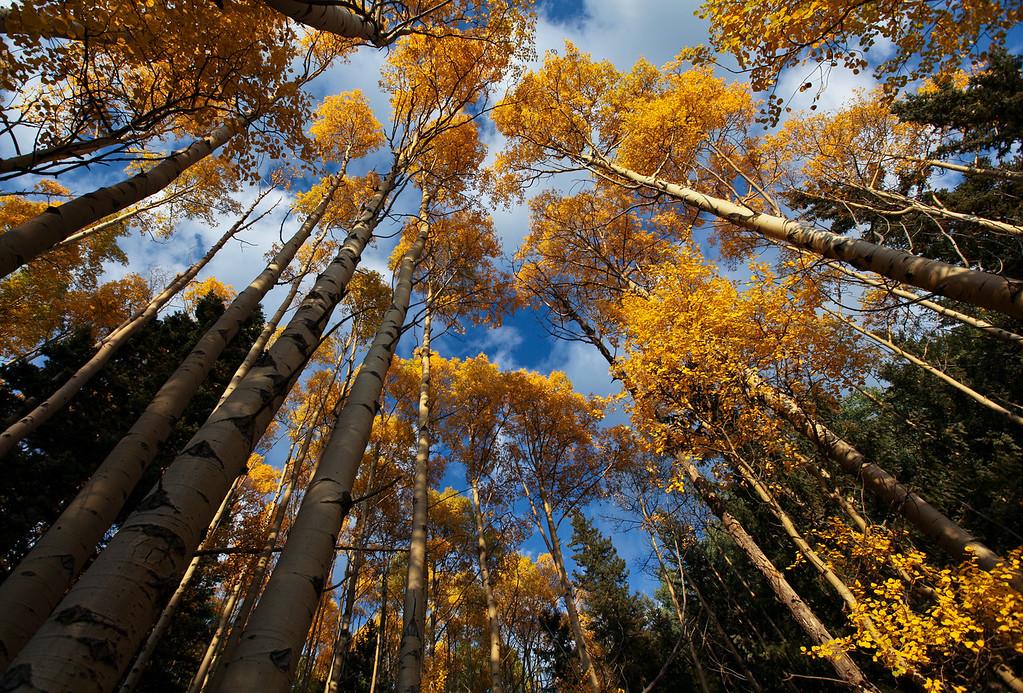 IMAGE: https://photos.smugmug.com/Landscapes/New-Mexico-September-2011/i-bktp2tB/7/XL/NSR-16-XL.jpg