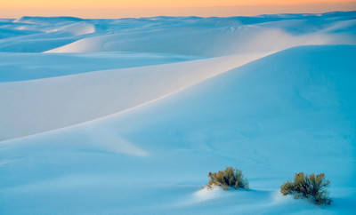 White Sands & Plants