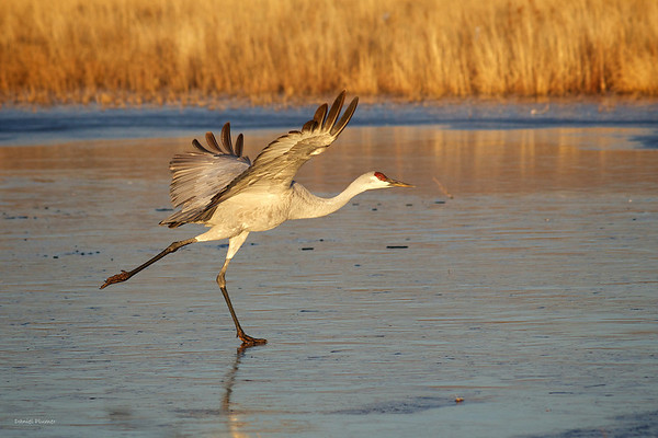 Ice Skating Crane