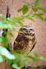 Living Desert Zoo Gardens State Park
