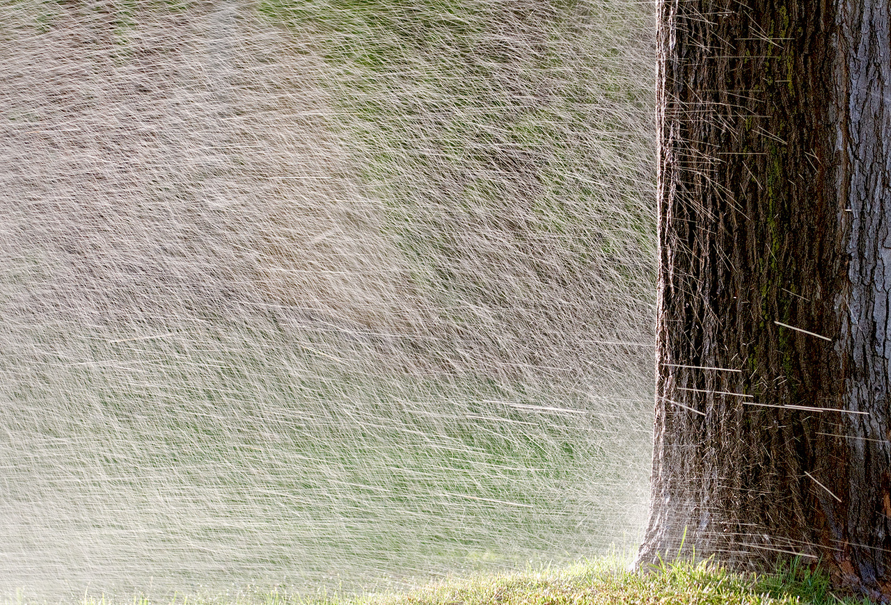 It's sprinkler time.