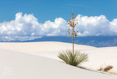 Classic White Sands New Mexico