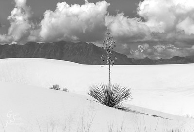 Yucca and Mountain