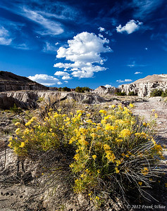 Rabbit bush and clouds, Plaza Blanco, Abiquiu, New Mexico.