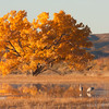 Fall foliage with Sandhill cranes
