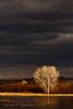 Bosque Del Apache Stormy Sky