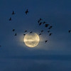 Full Moon, Bosque del Apache