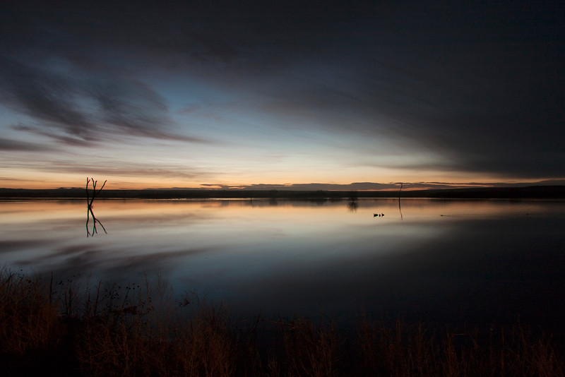 Dawn at Bosque del Apache