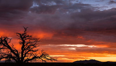 Canyon Rim Trail, Los Alamos, NM
