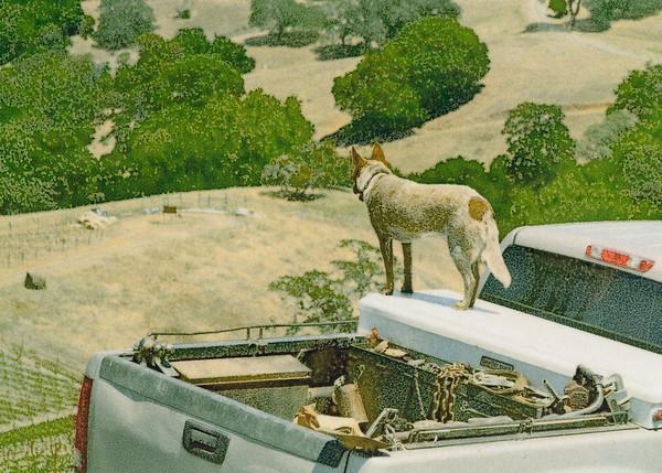 Dog, Rockpile AVA Sonoma