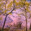 Zion Sieren Crimson Gold Trees Virgin River