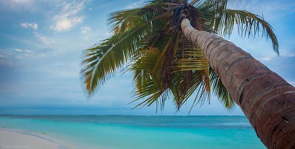 Caribbean Palm Tree Panoramic Dominican Republic Punta Cana