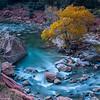 Virgin_River_Cottonwood_Zion_National_Park