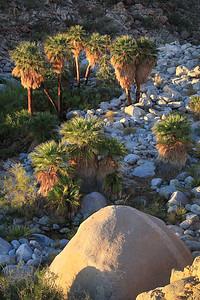 Guadalupe Canyon Baja California Mexico Palm Tree Oasis