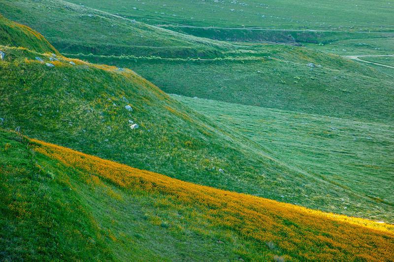 Bear Mountain Green Hills Wildflowers California