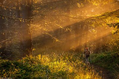 Lost Coast California Hiker