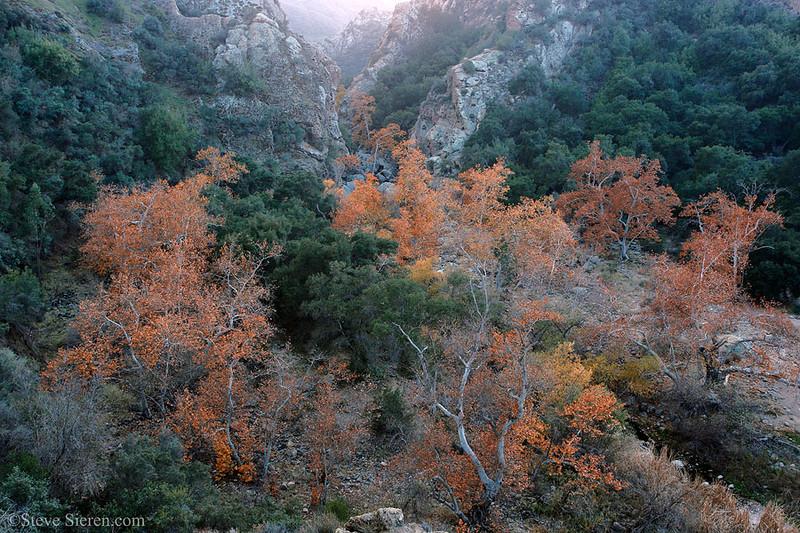 Fall Color Southern California Santa Monica Mountains