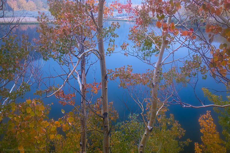 Eastern Sierra Autumn Aspen Trees Lake Reflection