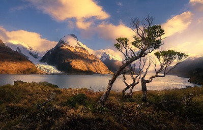 Fjord Trees