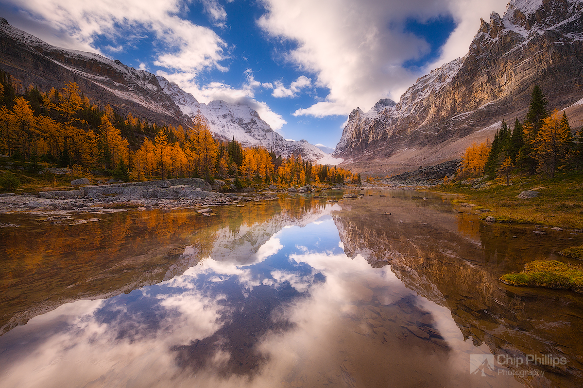 Opabin Plateau Larch Reflections