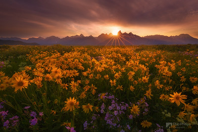 Antelope Valley Wildflower Sunset Grand Tetons