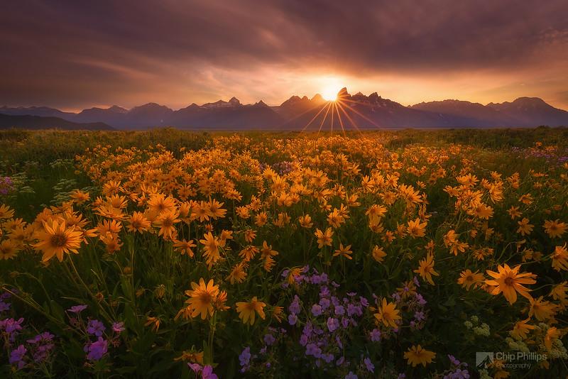 Antelope Valley Wildflower Sunset Grand Tetons
