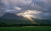 God beams break through a heavy cloud cover in Australia at the edge of the rain forest. The streak of light illuminates a crop of corn along the valley floor.