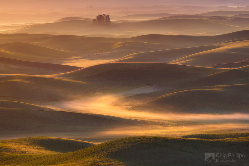 Trees and Fog Palouse