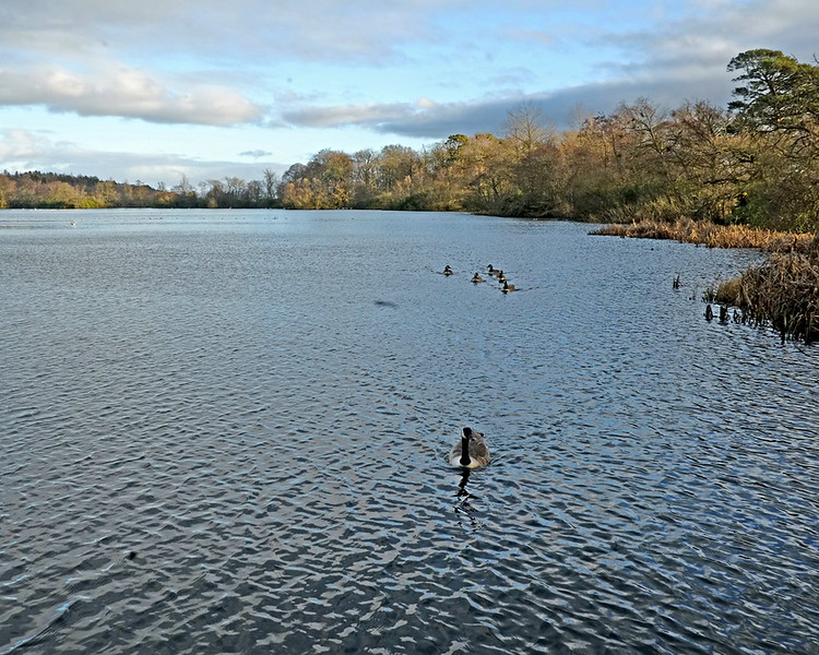 Bolam Lake and Country Park, Belsay in Northumberland