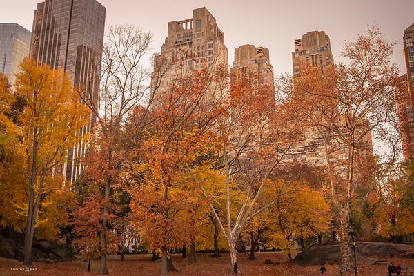 Fall Central Park 2