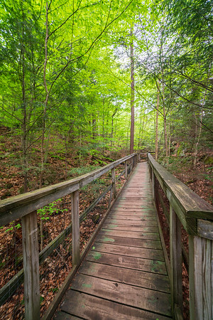 Boardwalk Through the Woods at High Falls Gorge