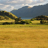 Farming in Wanaka is more than exciting!