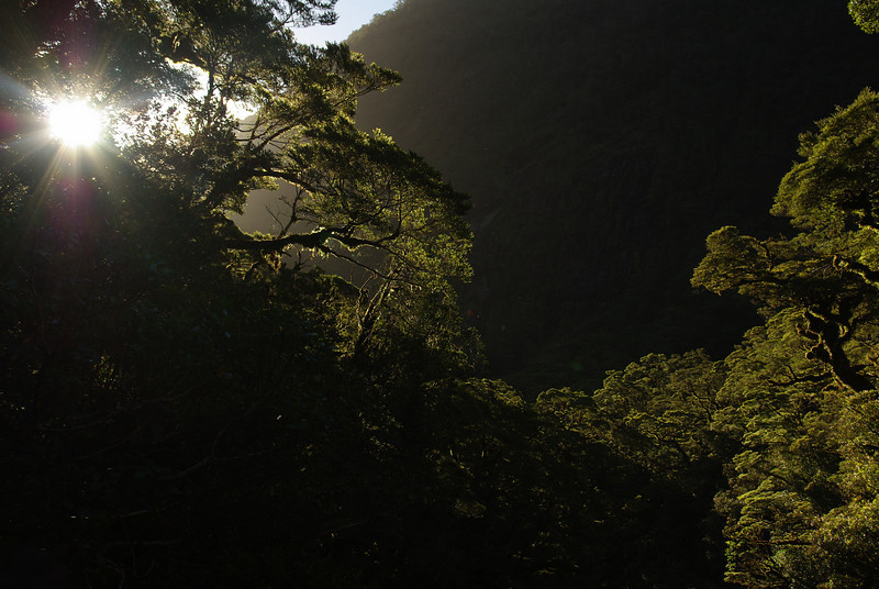 Fiordland Flora