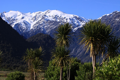 Franz Josef Glacier, South Island, NZ