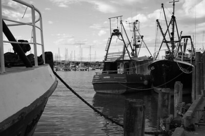 Napier Fishing Boats